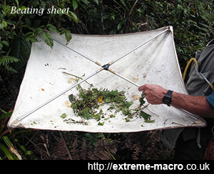 Beating sheet for collecting insects