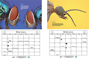 Macro Photography Calendar - May & June
