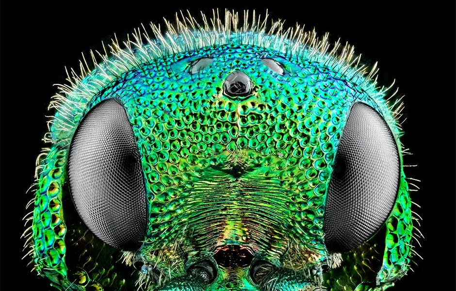 Extreme macro focus stacking, for high impact images of the very smallest of beautiful things